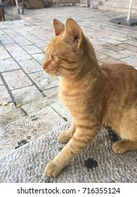 Ginger street cat in Jerusalem, Israel