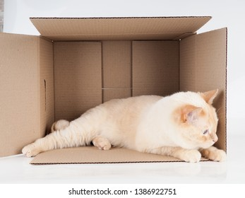 Ginger tomcat lying in the paper box, cardboard box with a cat on white background.