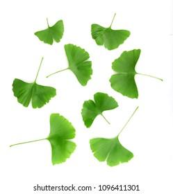Ginkgo leaf isolated on white background