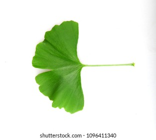 Ginkgo leaf isolated on white background