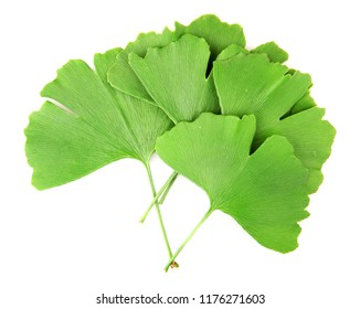 Ginkgo leaf isolated on white background.