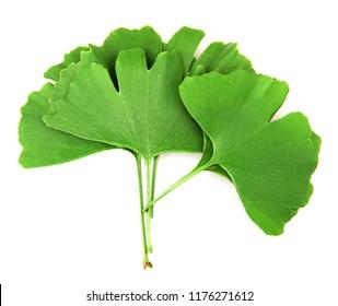 Ginkgo leaf isolated on white background.