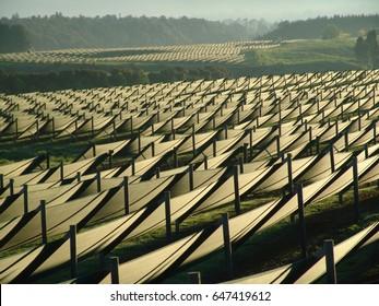 Ginseng Farm - Field / Sunrise