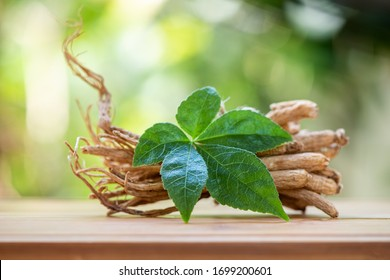 Ginseng and green leaf on a white background.