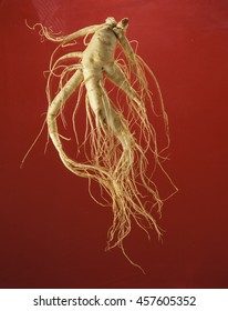 ginseng isolated on a red background