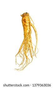 ginseng root isolate on white background