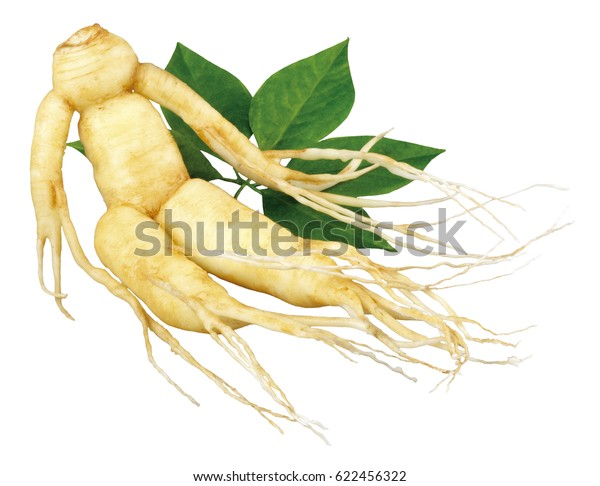 GINSENG ROOT AND LEAVES ON WHITE