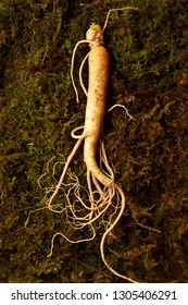 Ginseng root on moss