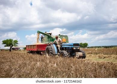 GIOIA DEL COLLE, ITALY - JULY 7, 2018: Combine transfers durum wheat to a tractor's trailer in a field located on Murgia plateau in Apulia region