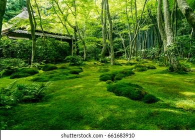 Giou-ji temple's Garden of mosses