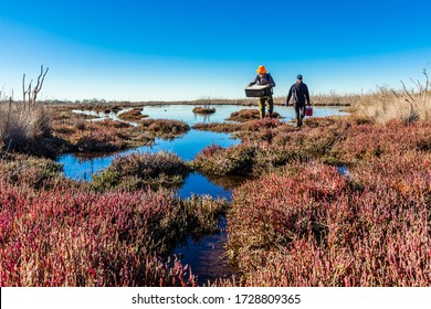 Gippsland, Victoria/Australia – June 26, 2019: Scientists returning from a wetland with samples collected to assess the health and carbon sequestration capacity of the ecosystem.