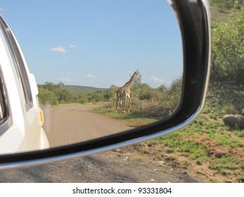 Giraffe In Car Mirror.
