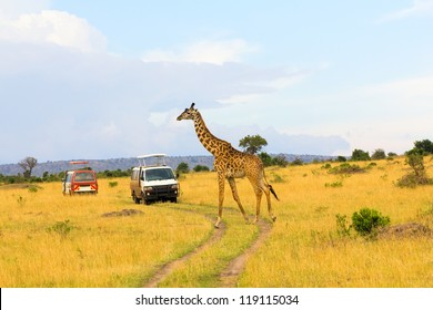 Giraffe crossing the road in Masai Mara National Reserve, Kenya