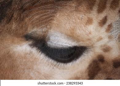 Giraffe eye, particular