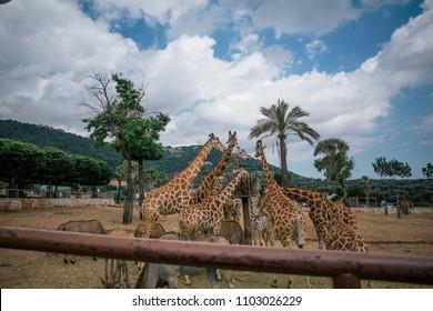 Giraffe in Fasano apulia safari zoo Italy
