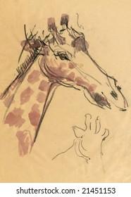 giraffe - head