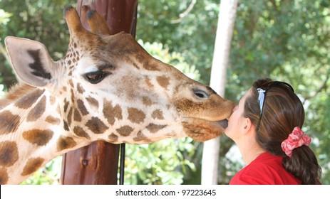giraffe kiss a beautiful young woman