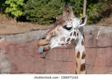 giraffe with the long neck