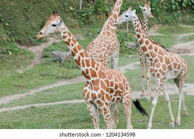 Giraffe out in safari jungle