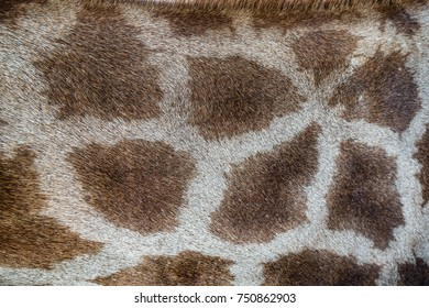 giraffe pattern texture skin background