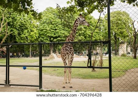 Giraffe Zoo Schonbrunn Palace Vienna Austria Stock Photo Edit Now