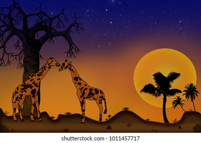 Giraffes on a beautiful sunset background.Two giraffe in a hot african landscape with a setting sun