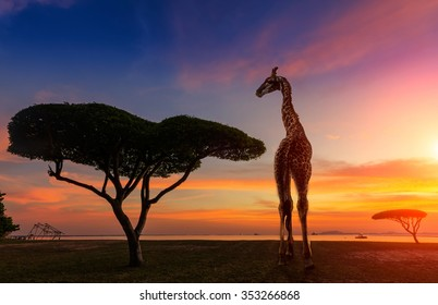 Giraffes in the savannah at sunset