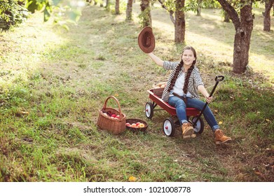 Girl with Apple in the Apple Orchard. Beautiful Girl Eating Organic Apple in the Orchard. Harvest Concept. Garden, teenager eating fruits at fall harvest.