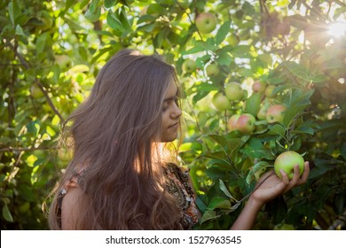 Girl in the apple orchard eating an apple. Autumn fruit picking. Young girl with long hair. Balanced Nutrition, Vegetarianism