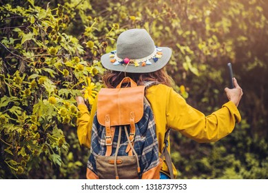 """A girl with a backpack is using the phone to take selfie a picture of the Bua Tong flower yellow. """"Mexican sunflower"""""""