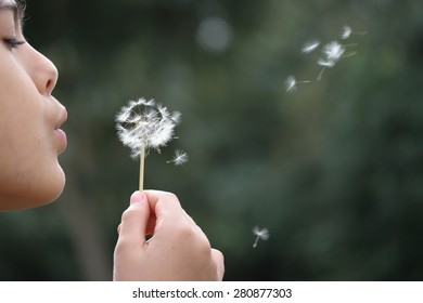 Girl blows dandelion flower and pieces fly