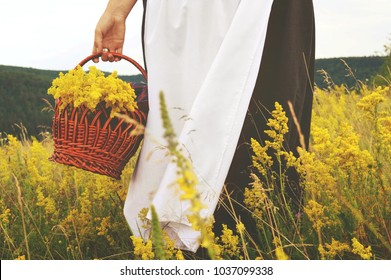 A girl in a brown skirt with white apron holding a basket of yellow field flowers. Field of yellow flowers. Historical costume of the 18th century
