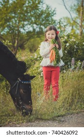 Girl with brunette hair and brown eyes stylish dressed wearing rustic village clothes white shirt and red pants on belt posing feeding black young horse pony by carrots.