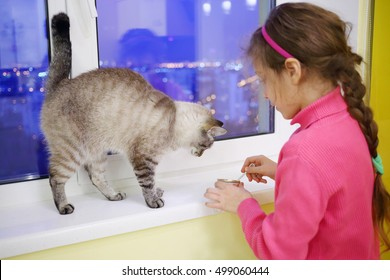 Girl child in pink feeding pet cat by spoon on white windowsill at evening, focus on animal