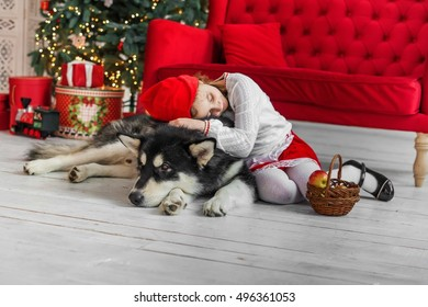 "Girl child red riding hood costume with a dog near a Christmas tree. The girl in the red riding hood costume with a big dog - Gray Wolf. Fairy Tale ""Little Red Riding Hood"""