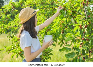 Girl child tearing from tree harvest of mulberries in mug in home garden, copy space. Childhood, healthy food, nature, summer, vacation concept
