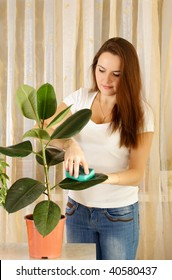 Girl cleaning ficus by wet sponge at room
