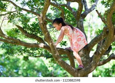 Girl climbing trees