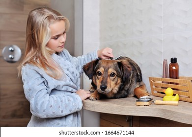 Girl is combing her dog with a brush
