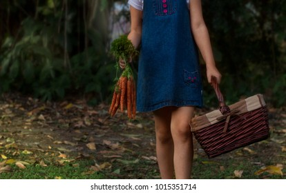 Girl in the country carrying carrots and a basket after gardening