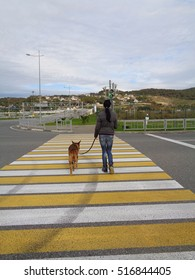 Girl with dog moving at pedestrian crossing