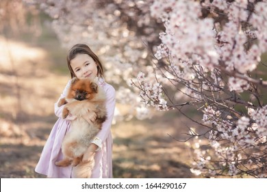 Girl with dog pikines. A dog in the arms of a little girl in a pink dress on a walk in the meadow
