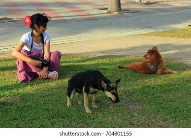 Girl and dogs. The city of Pattaya. Thailand.