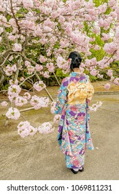 Girl dressed in traditional Japanese dress against blooming cherry tree, Kyoto, Japan