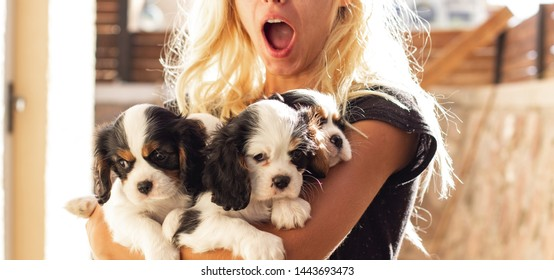 girl excited happy emotions with open mouth holding four King Charles Cavalier puppies adorable photogenic domestic pets portrait