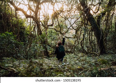 Girl Exploring Ancient Forest, Bunya Mountains