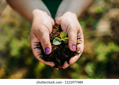 Girl farmer holding in hands a fertile land with a green plant
