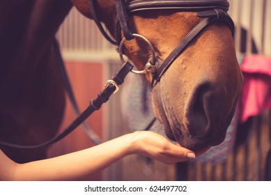 Girl feeding her horse in a barn.