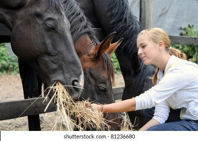 girl feeding horses in the farm in summer day