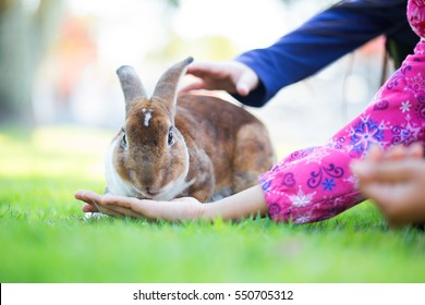 girl is feeding the rabbit
